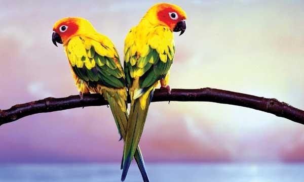 PunjabKesari, Parrot, तोता मैना
