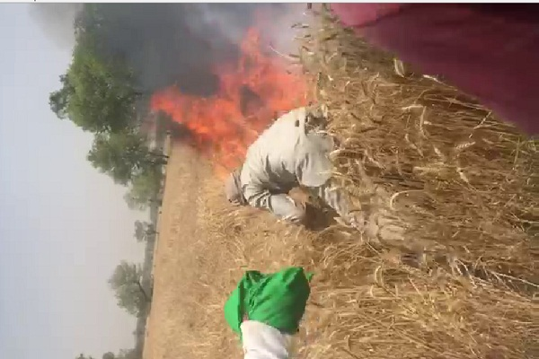 PunjabKesari, Loksabha, Election, wheat, fire, Burning