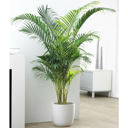 स्मॉग से बचना चाहते है तो घर में लगाएं ये पौधे - plants are effective in  protecting smog-mobile