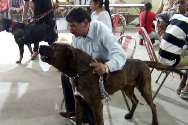 PunjabKesari, Dog Show Image