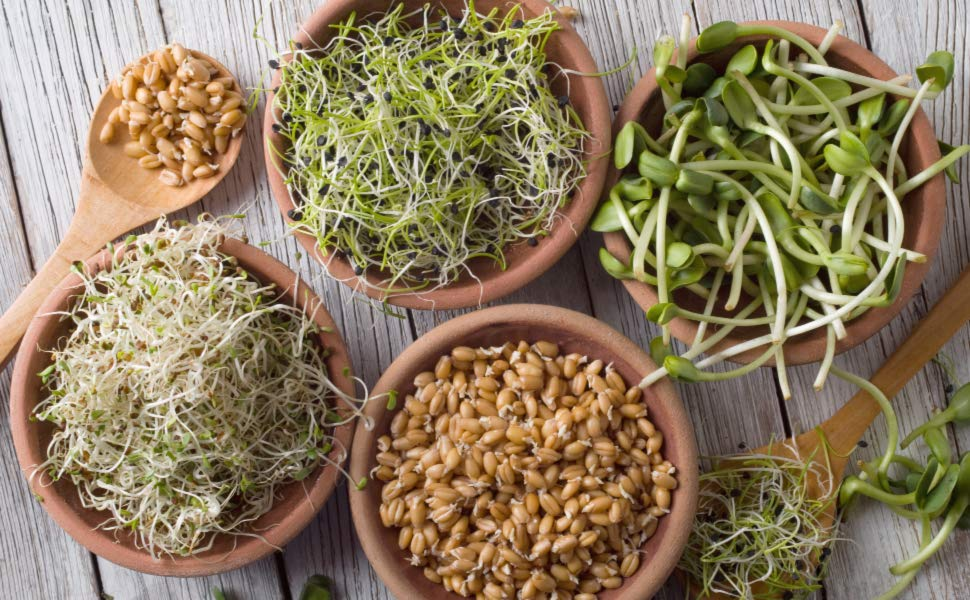 PunjabKesari,अंकुरित अनाज इमेज, sprouts image