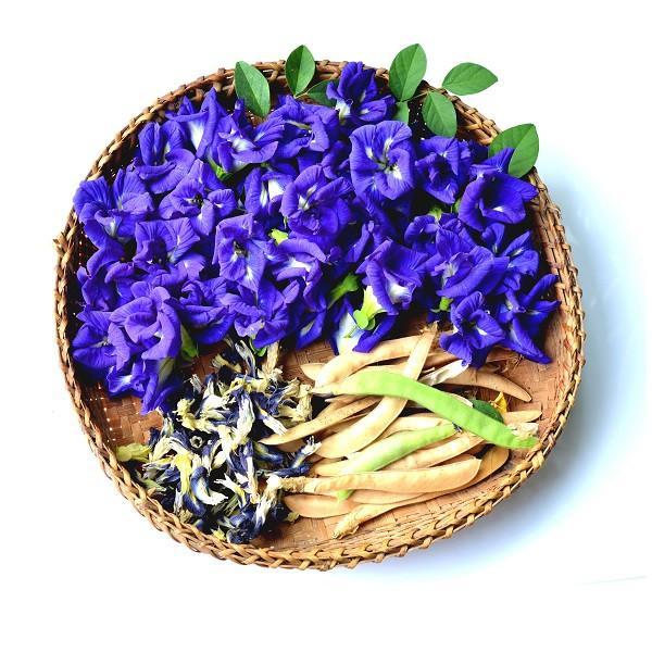 PunjabKesari, Butterfly Pea Tea Image, Nari, Blue Tea