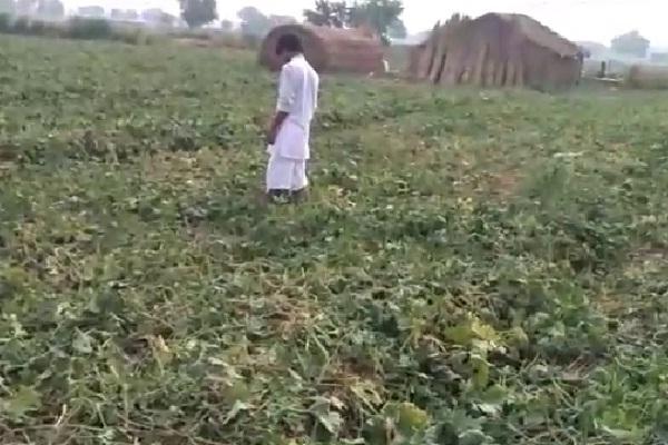 PunjabKesari, m