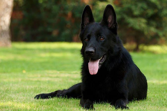 PunjabKesari, काला कुत्ता, black dog