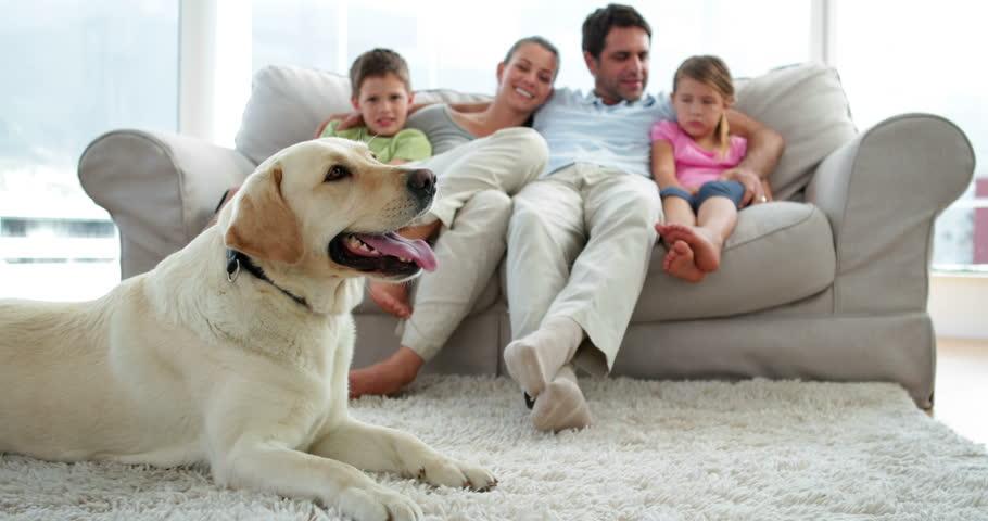 PunjabKesari, pet dog in home