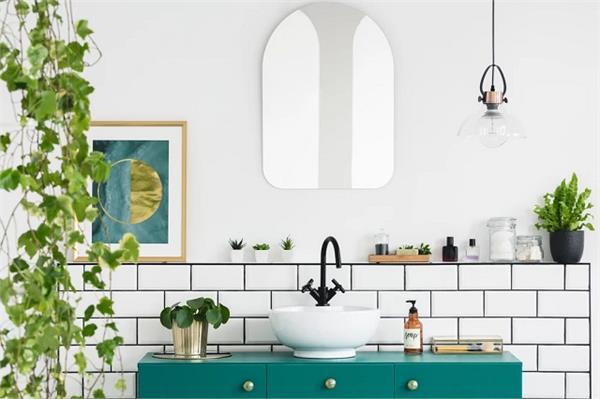 Bathroom Plant: ज्यादा नमी में रहेंगे जिंदा और वातावरण भी करेंगे शुद्ध