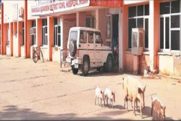 PunjabKesari, pig