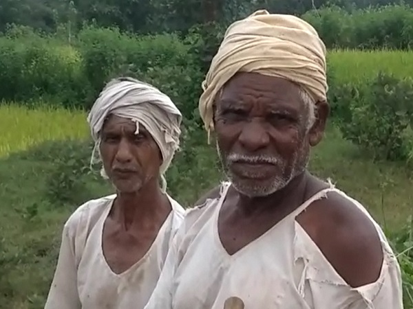 PunjabKesari, Madhya Pradesh, Balaghat, rice farming, Prime Minister Crop Insurance Scheme, Prime Minister Narendra Modi, BJP, Congress, Agriculture