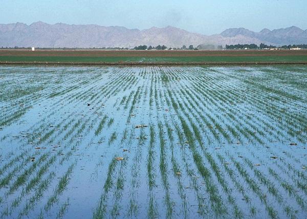 PunjabKesari, irrigation