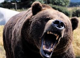 man injured in poonch in bear attack