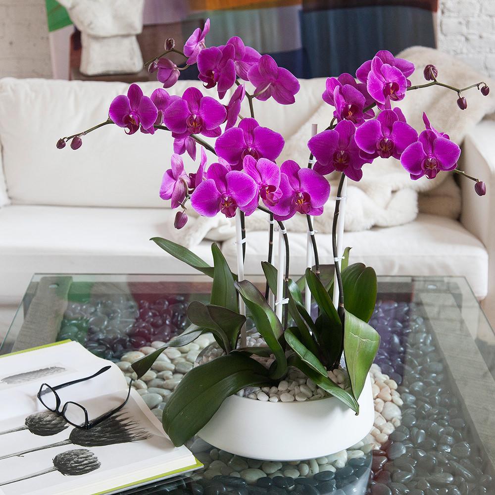 PunjabKesari, Nari, Orchids image