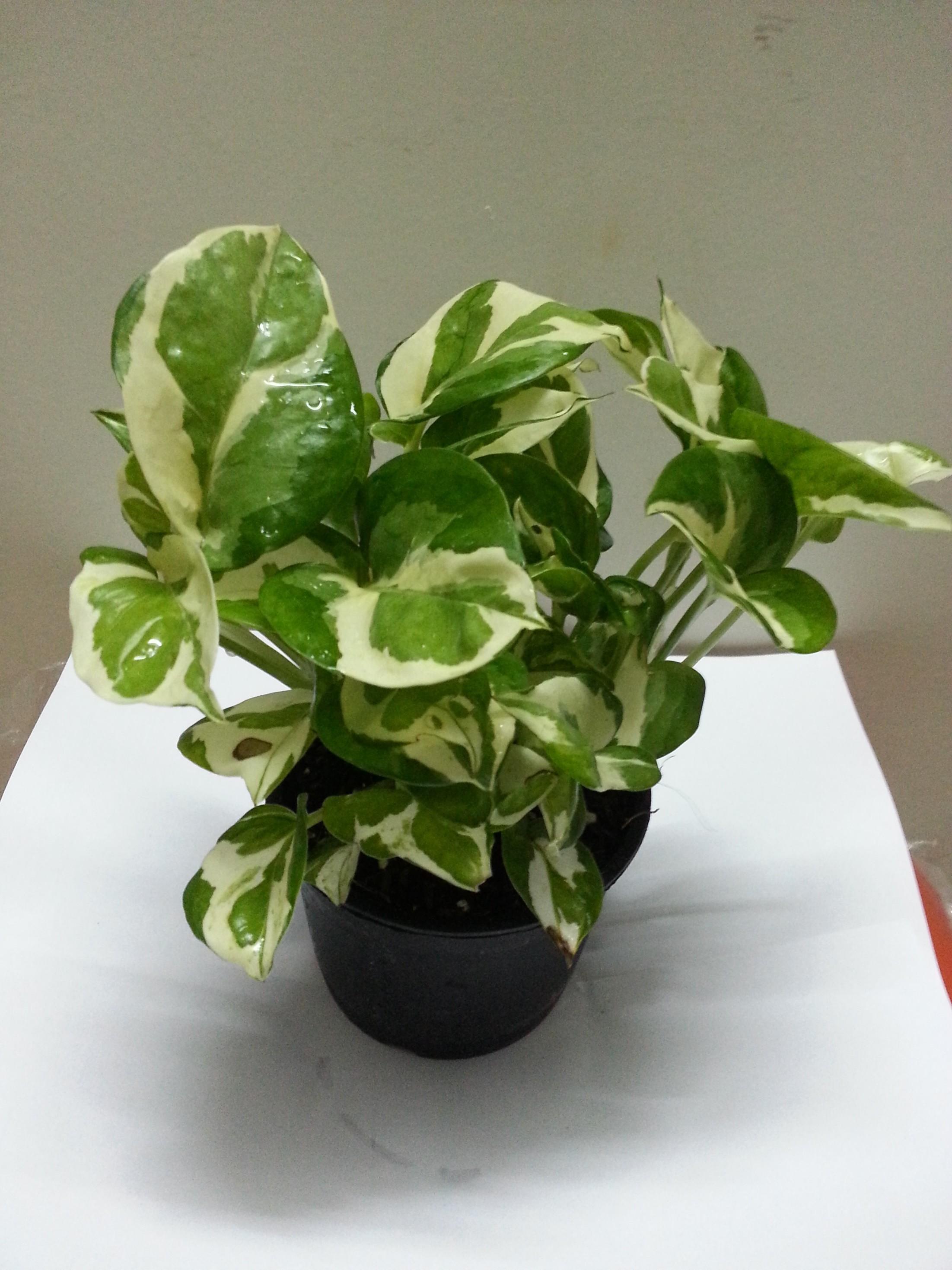 PunjabKesari, Nari, Money plant image