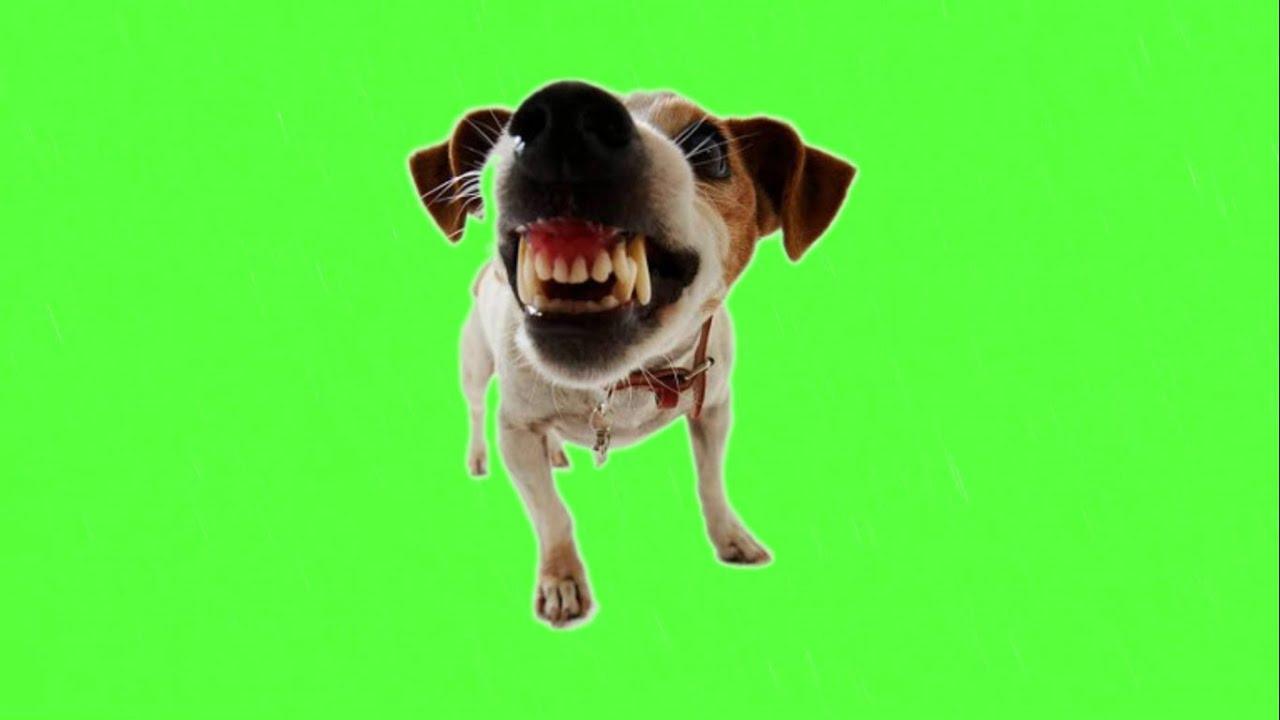 PunjabKesari, Angry dog