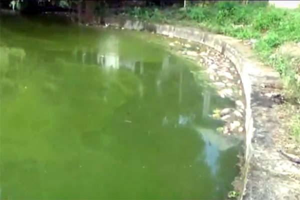 PunjabKesari, Pond Image