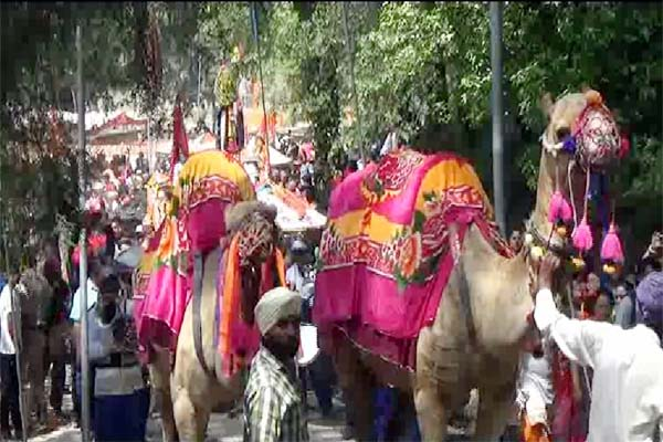 PunjabKesari, Camel Image