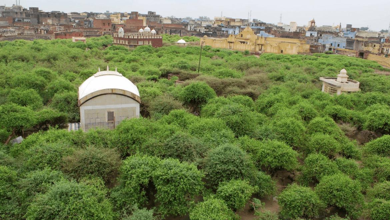 PunjabKesari, निधिवन, वृंदावन, Nidhivan, Vrindavan