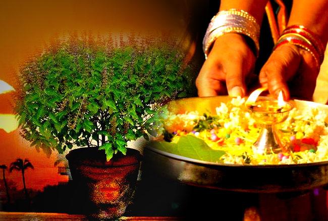 Tulsi Plant, Tulsi Pujan, Tulsi Worship, तुलसी, तुलसी पूजन, Vastu Tips, Basic Vastu Facts, Tulsi Vastu Facts, Vastu Dosh, Vastu Shastra, Home Vastu Dosh