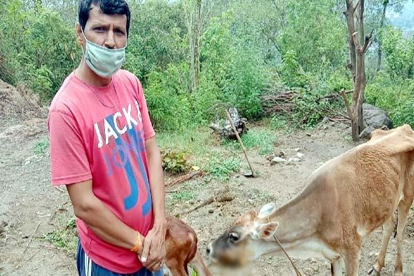 PunjabKesari, Owner and Cow Image