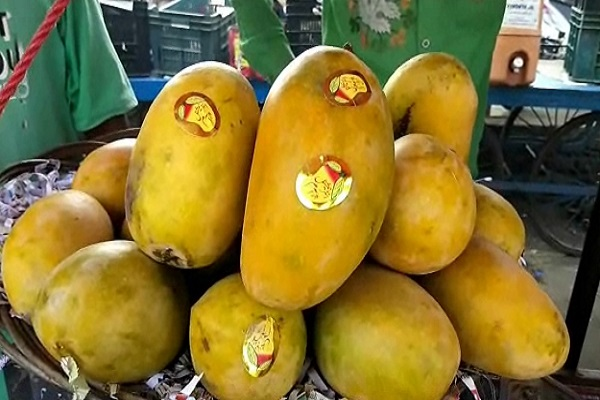 pakistani mangoes being bought heavily in panipat s vegetable markets