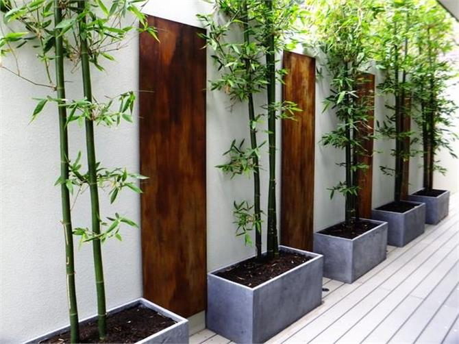 if you want fresh air then keep these plants at home