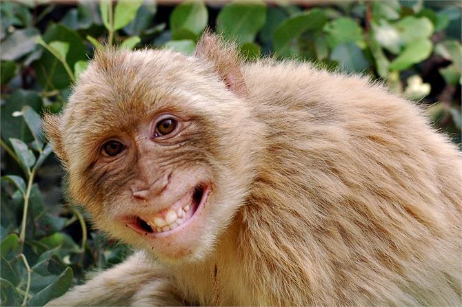 please use the helpline so worried monkey