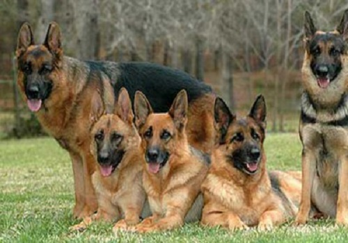 government compensation to the victims of stray dogs supreme court