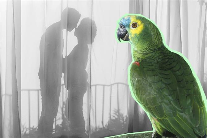 parrot reveals husband affair with housemaid