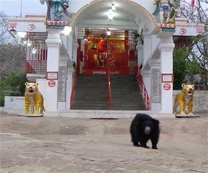यहां हाथ जोड़कर पूजा करते हैं भालू! (Pics)
