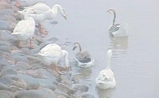 chandigarh is safe this year from bird flu