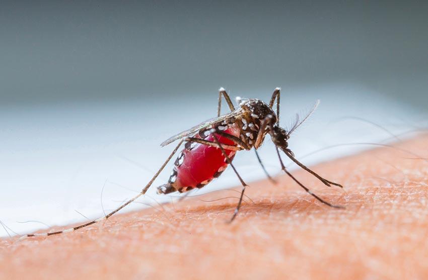 increasing the number of dengue patients