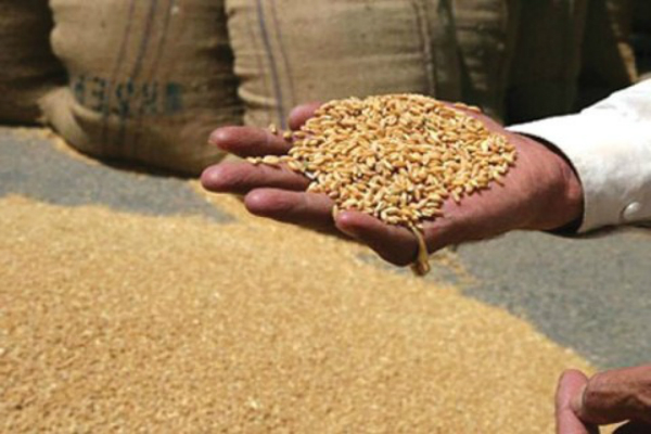 increase in msp of wheat  gram  mustard
