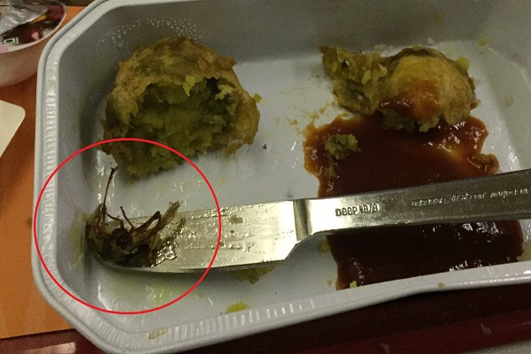 cockroach found in meal served on air india flight