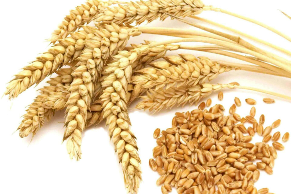wheat futures prices due to weak demand fell 0 35