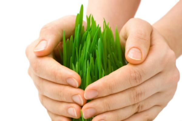 crop insurance scheme kms bank account shivraj singh chauhan