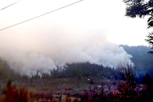 kinnour  jungle  fire  loss