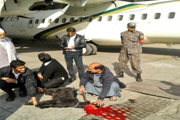 pakistan airline staff sacrifices goat on runway to ward off bad luck