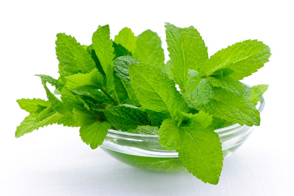 advantages of mint in summer