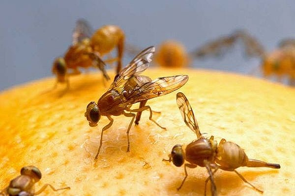follow these simple tips to get rid of flies
