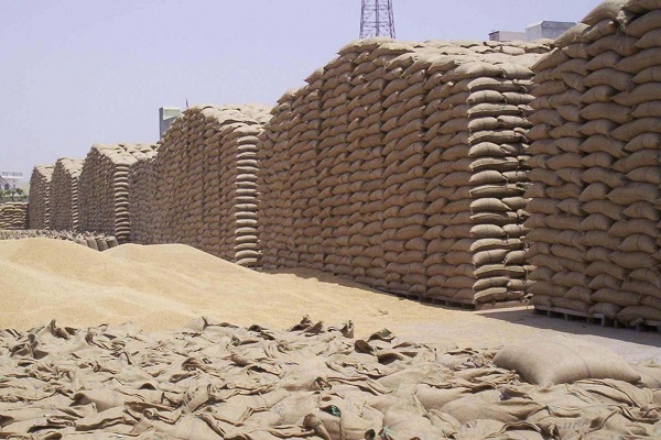 hafeed bought 25 thousand quintals of wheat on the first day
