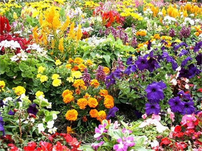 luck flowers