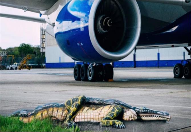 british airways puts alligator on gatwick runway to encourage more people to visit florida