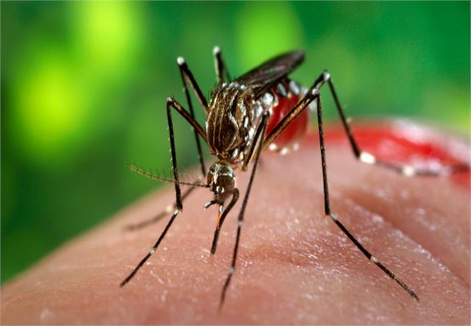 zika warnings lead to sharp increase in demand for abortion in latin america