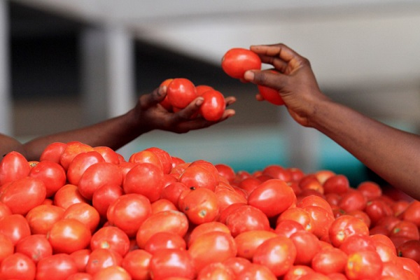 tomato is costly reaching 80 per kg