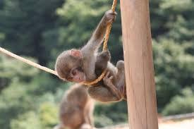 monkeys created problem in kids park