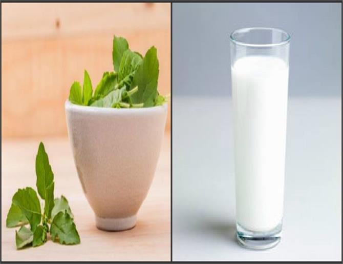 Image result for खाली पेट दूध में तुलसी