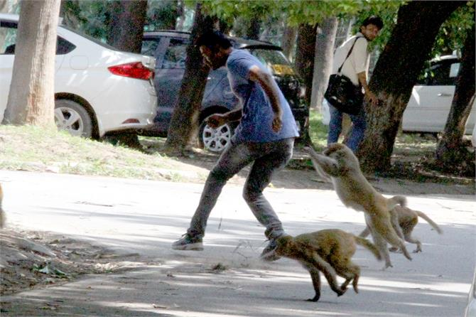 monkey menace students are in tension