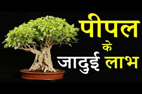 learn from the scriptures mystery of peepal