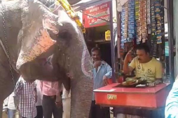 madhya pradesh  elephant  pan  haryana