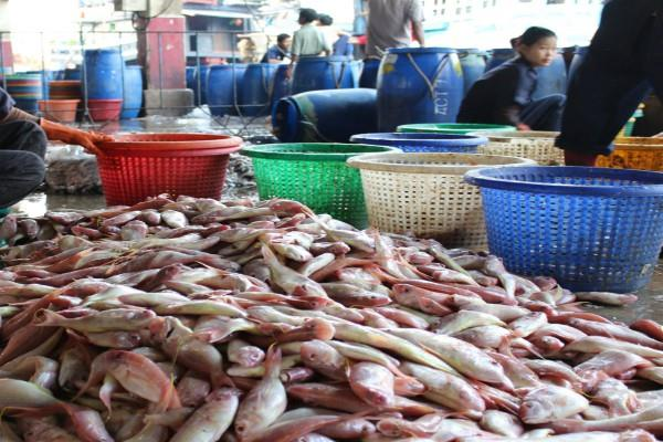 increase in export of marine products in the first quarter