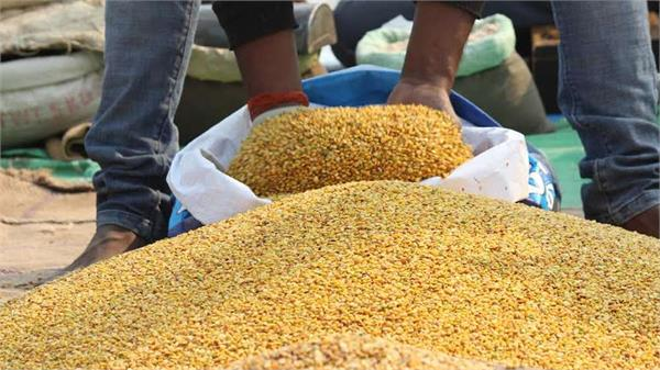 prices of pulses are continuously on the ground